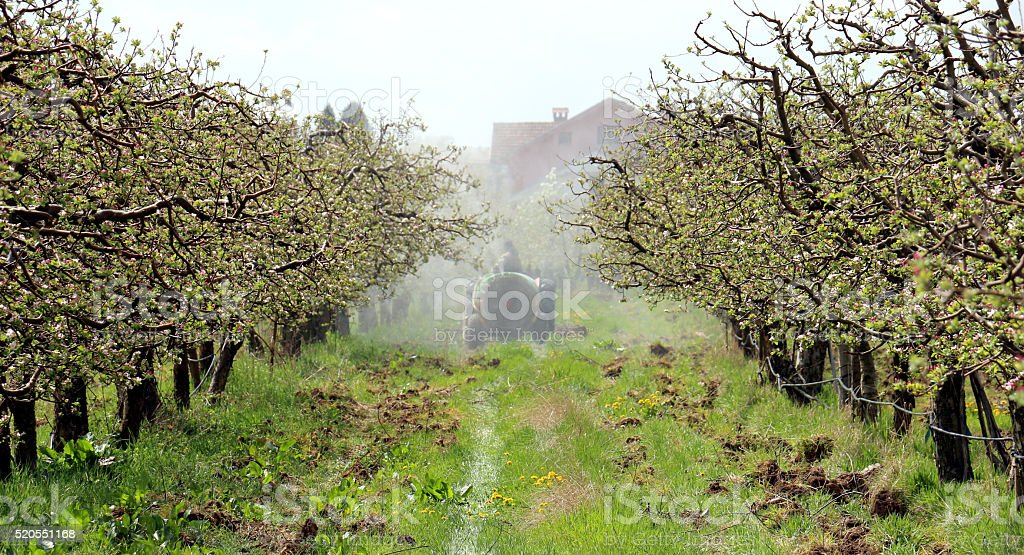 spraying apple orchard in spring stock photo