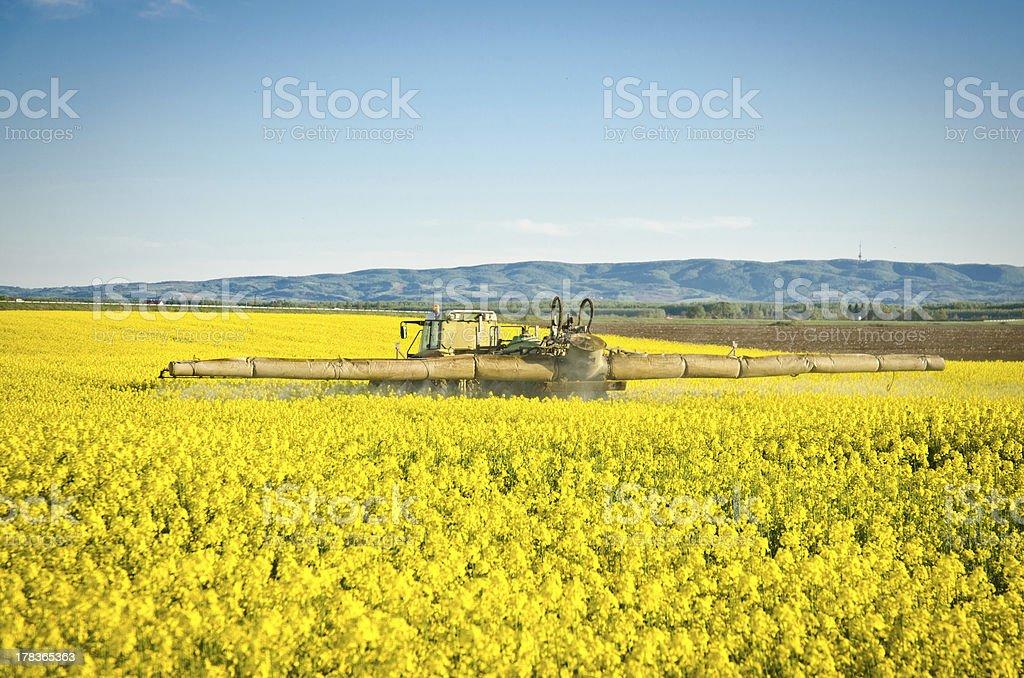 Spraying canola field royalty-free stock photo