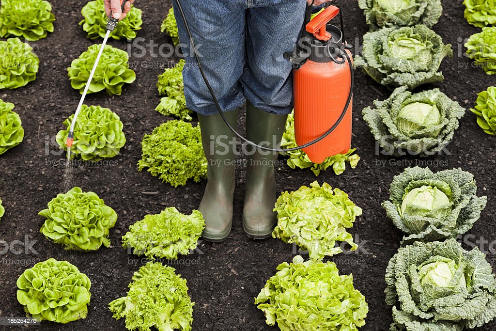 Spraying crops stock photo