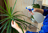 Spraying from the sprinkler of indoor plants
