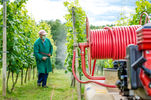 A farmer sprays his grapes with some chemical substance, wearing only a face mask.