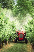 Farmer with tractor spraying grapevines in vineyard.