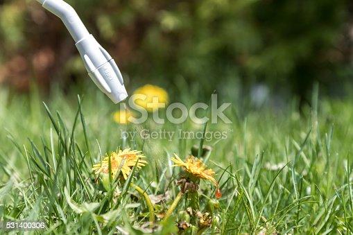 DSLR picture of spraying herbicide on Dandelion