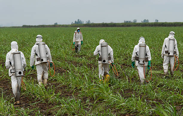 spraying herbicide spraying herbicide herbicide stock pictures, royalty-free photos & images