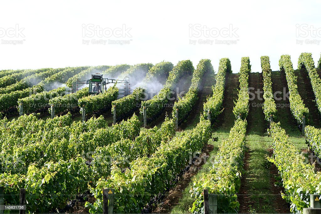 Spraying in the vineyard royalty-free stock photo