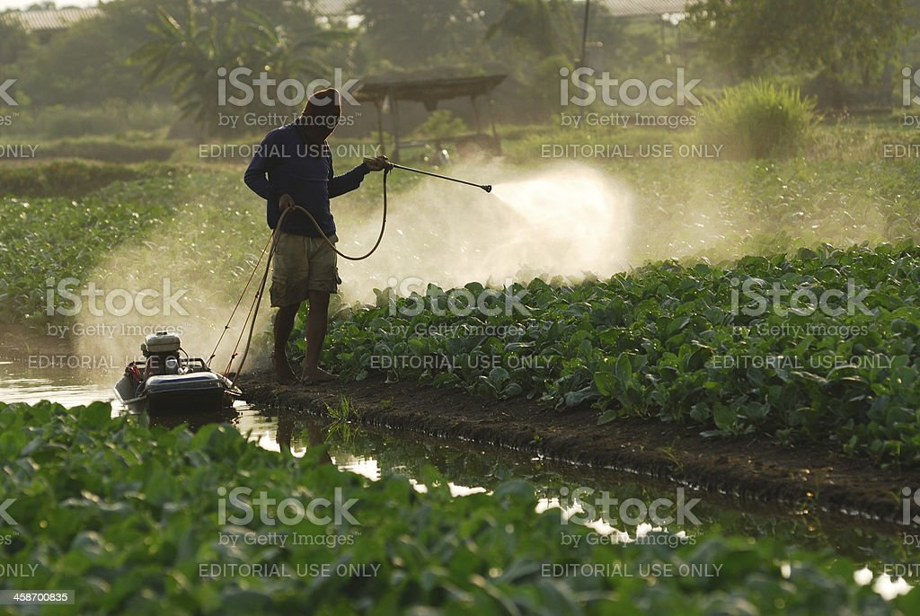 Spraying insecticide royalty-free stock photo