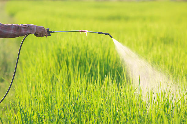 spraying pesticide spraying pesticide in rice field herbicide stock pictures, royalty-free photos & images