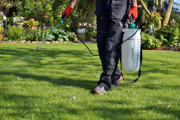 spraying pesticide with portable sprayer to eradicate garden weeds in the lawn. weedicide spray on the weeds in the garden. Pesticide use is hazardous to health. Weed control concept. weed killer series pest stock pictures, royalty-free photos & images