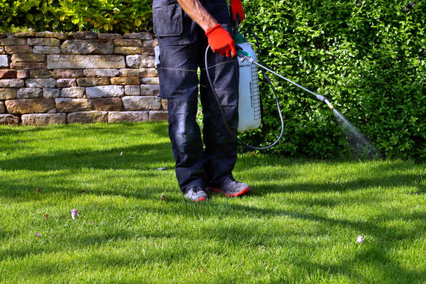 spraying pesticide with portable sprayer to eradicate garden weeds in the lawn. weedicide spray on the weeds in the garden. Pesticide use is hazardous to health. stock photo