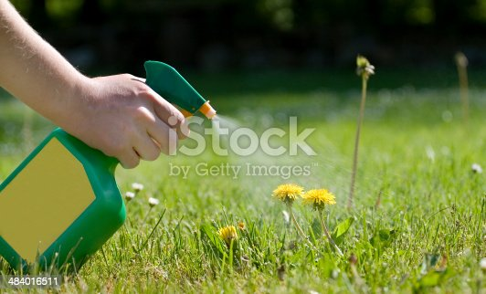 Spraying dandelions with a green and yellow atomizer in the garden.