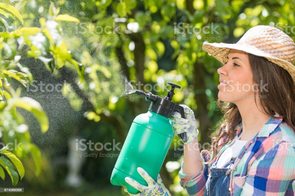 Spraying the plants royalty-free stock photo