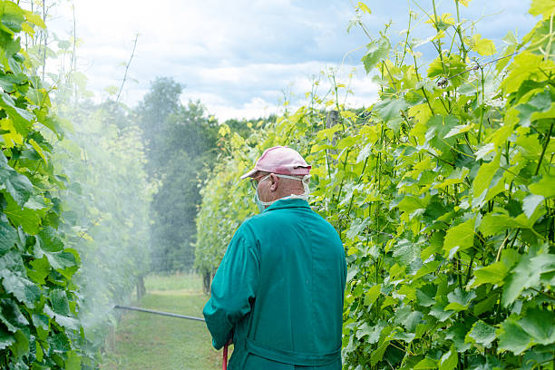 Spraying the vines stock photo
