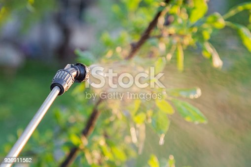 istock Spraying trees with pesticides 936911562