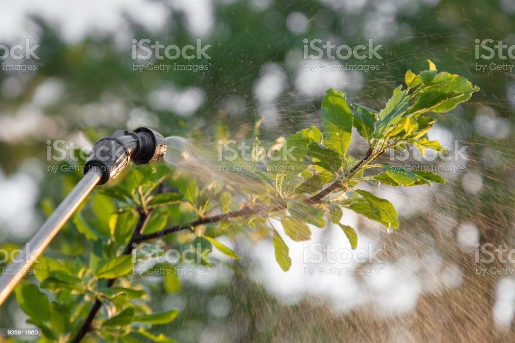 Spraying trees with pesticides stock photo