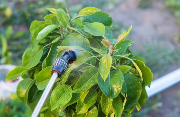 Árvores de pulverização com pesticidas - foto de acervo