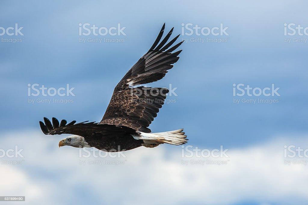 Spread Eagle Open Wings Fishing - foto de stock