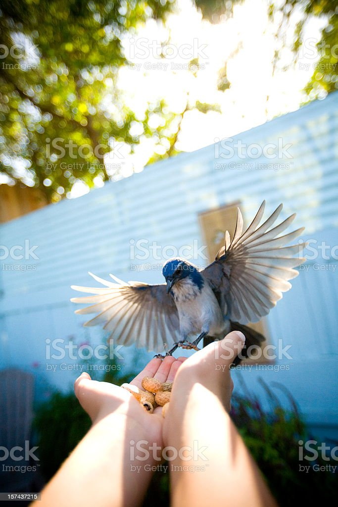 spread wings royalty-free stock photo