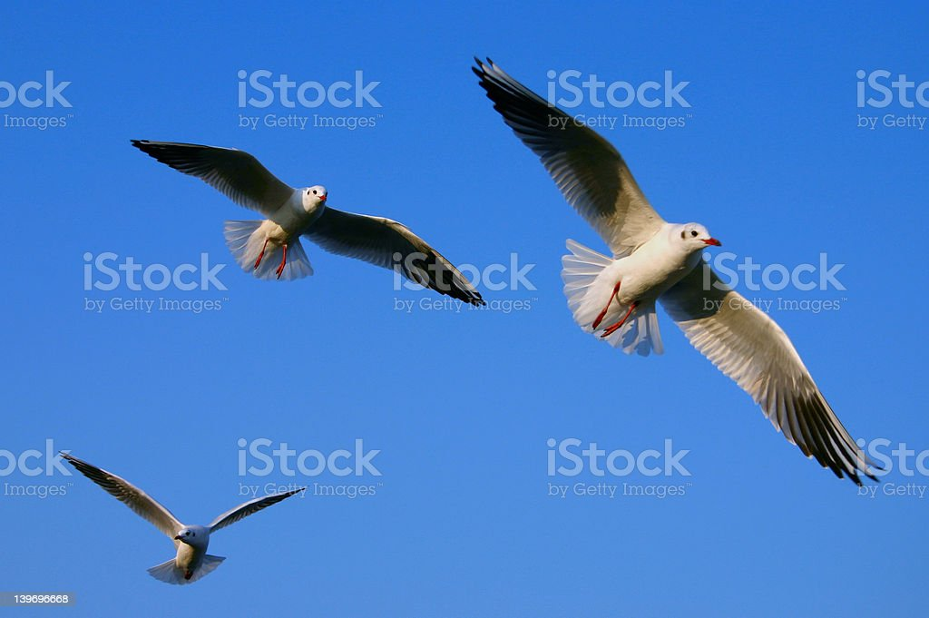 Spread your wings stock photo