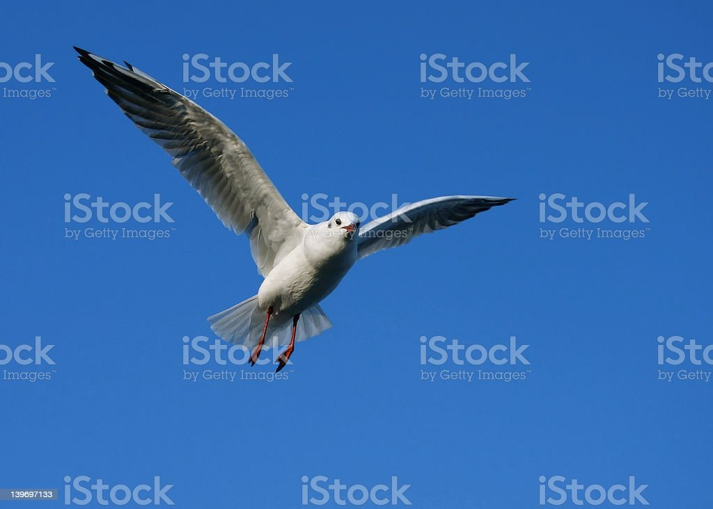 Spread your wings #5 royalty-free stock photo