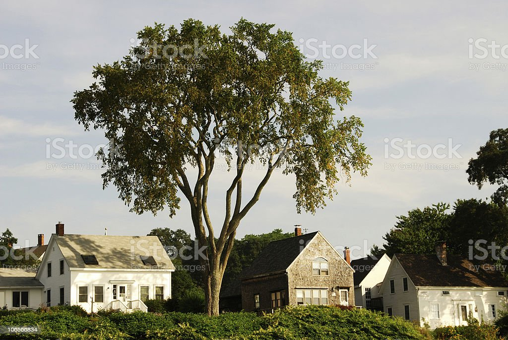 Spreading Boughs royalty-free stock photo