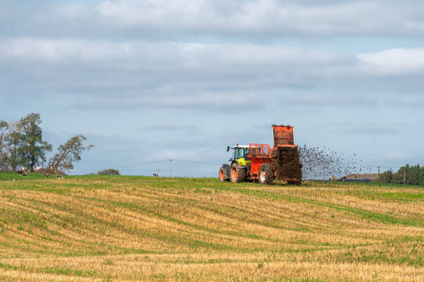 Spreading dung on a recently harvested field in Dumfries and Galloway, south west Scotland A tractor pulling a trailer containing manure that is being spread on a field that was recently harvested johnfscott stock pictures, royalty-free photos & images
