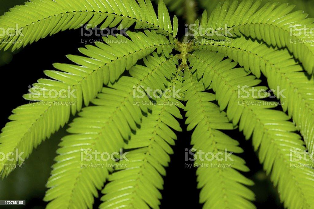 Spreading leaf royalty-free stock photo