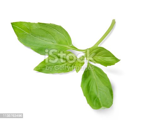 Sprig of basil on white isolated background. Close-up. View from above.