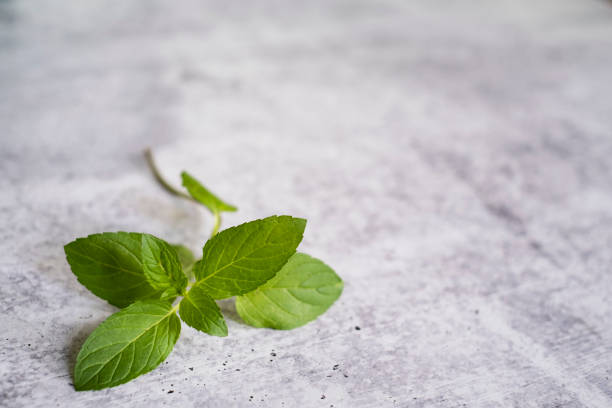 A Sprig of Chocolate Mint on a Light Surface stock photo