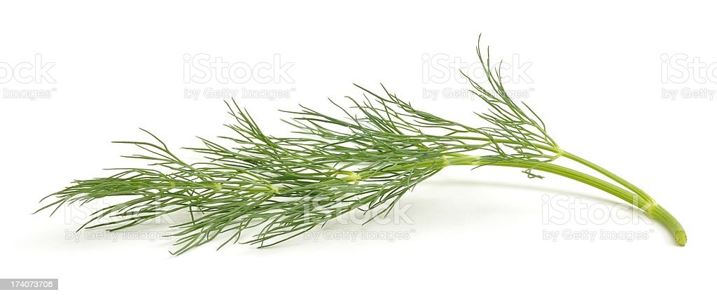 Sprig of Fennel stock photo