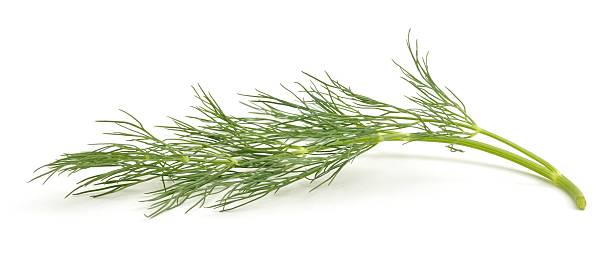 Sprig of Fennel A sprig of dill isolated on a white background. dill stock pictures, royalty-free photos & images