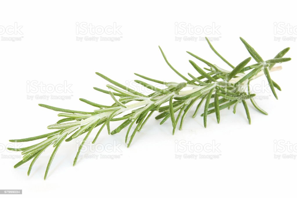 Sprig of fresh rosemary on white royalty free stockfoto