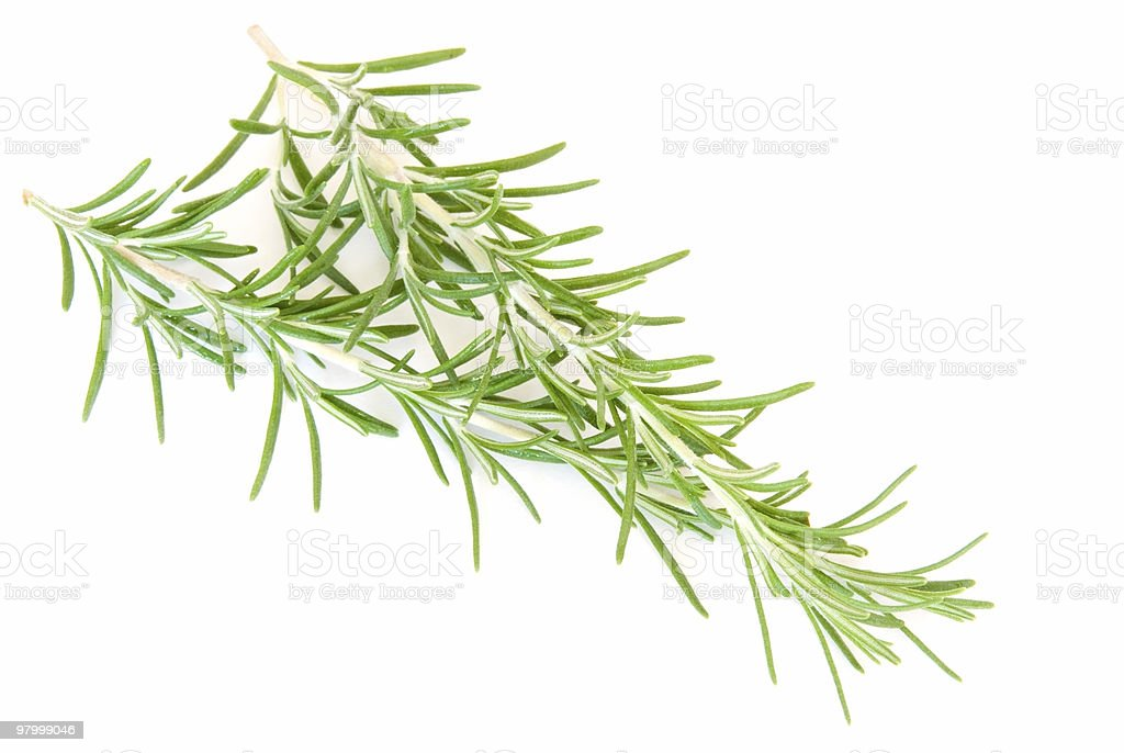 Sprig of fresh rosemary on white royalty-free stock photo