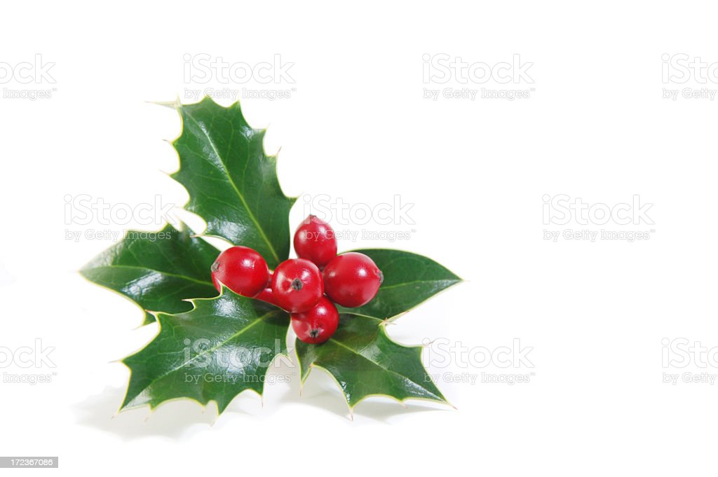 Sprig of green holly and ripe red berries royalty-free stock photo