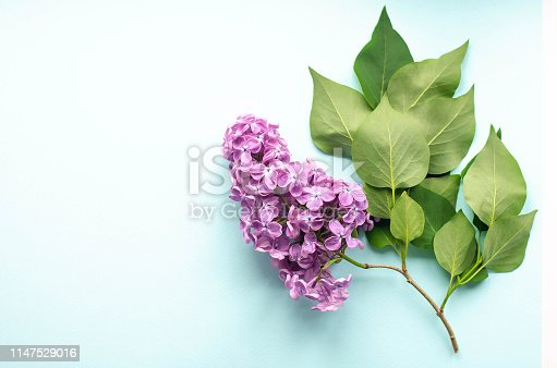 1147995495 istock photo Sprig of lilac with green leaves on mint background. 1147529016