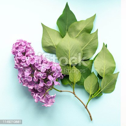 istock Sprig of lilac with green leaves on mint background. 1149210881