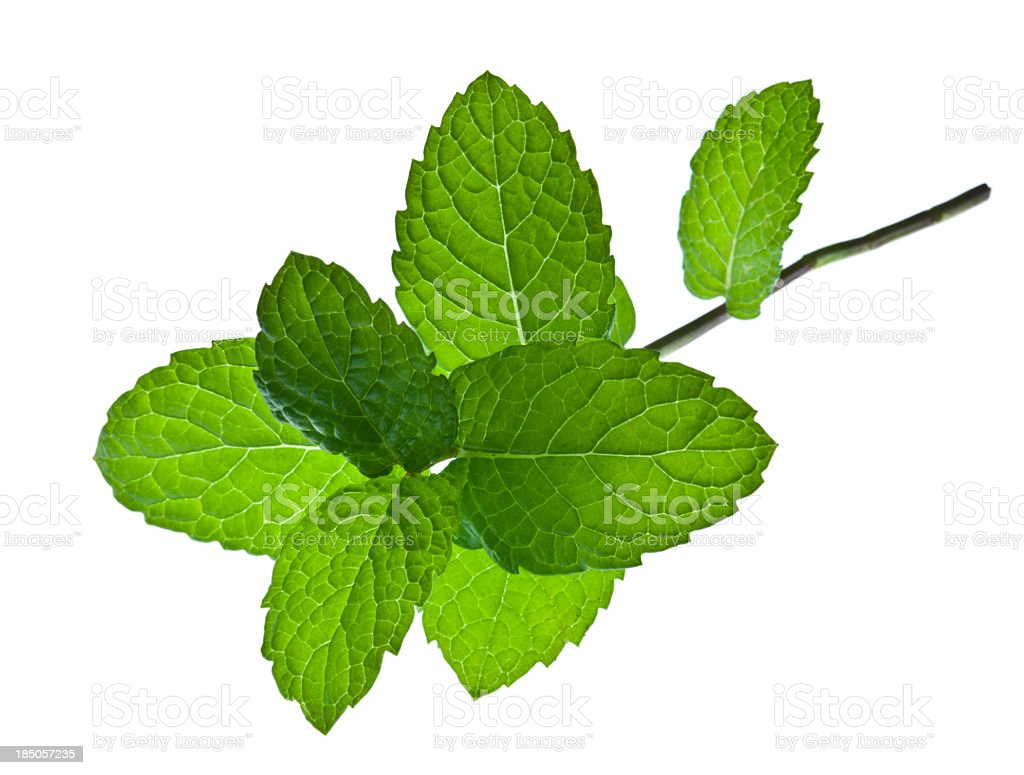 A sprig of mint leaves on a white background stock photo