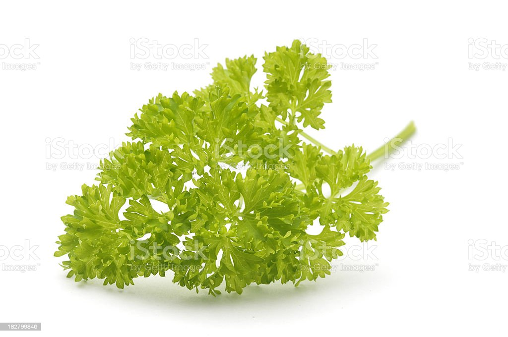 Sprig of Parsley royalty-free stock photo