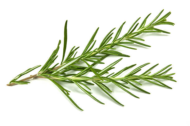 Sprig of rosemary against white background stock photo