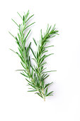'Fresh bunch of rosemary with selective focus. Rosemary, part of the mint family, is a strong scented resinous herb used in cooking.'