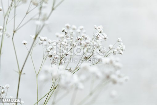 Sprig of small white flowers in the japanese style stock photo sprig of small white flowers in the japanese style stock photo more pictures of abstract istock mightylinksfo