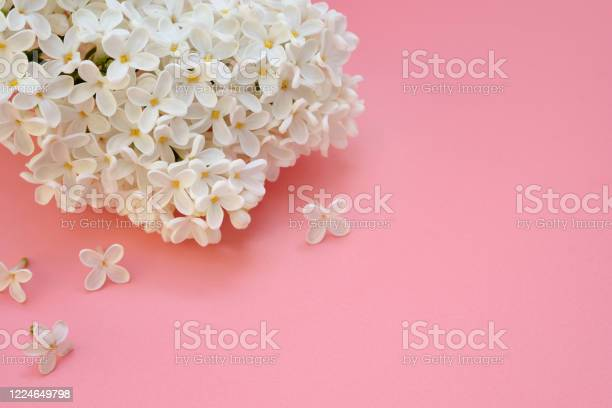 Photo of A sprig of white lilac (Syringa) closeup. copy space