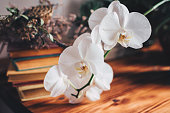 istock Sprig of white orchid flower. 1202369213