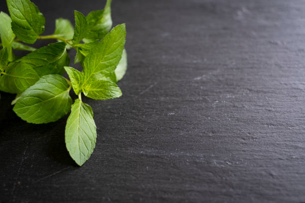 Sprigs of Chocolate Mint on Slate stock photo