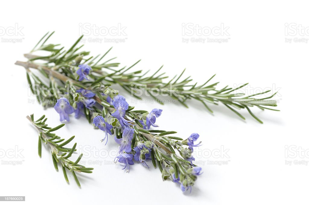 Sprigs of Fresh Rosemary royalty-free stock photo