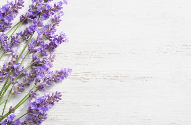 sprigs of lavender on  wooden shabby background. - colore lavanda foto e immagini stock