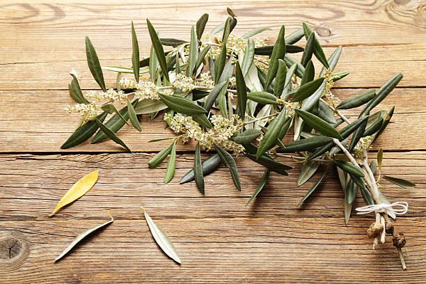 ramoscelli di olivo in fiore su sfondo in legno - ramoscello d'ulivo foto e immagini stock