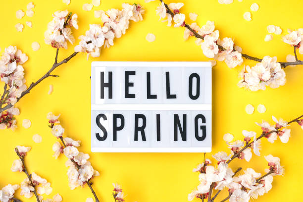 Sprigs of the apricot tree with flowers, lightbox with text Hello spring on yellow background. The concept of spring came Sprigs of the apricot tree with flowers, lightbox with text Hello spring on yellow background. The concept of spring came. muziekfestival stock pictures, royalty-free photos & images