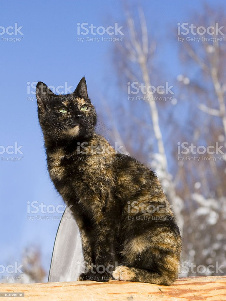 Spring. A cat with green eyes against the blue sky. stock photo