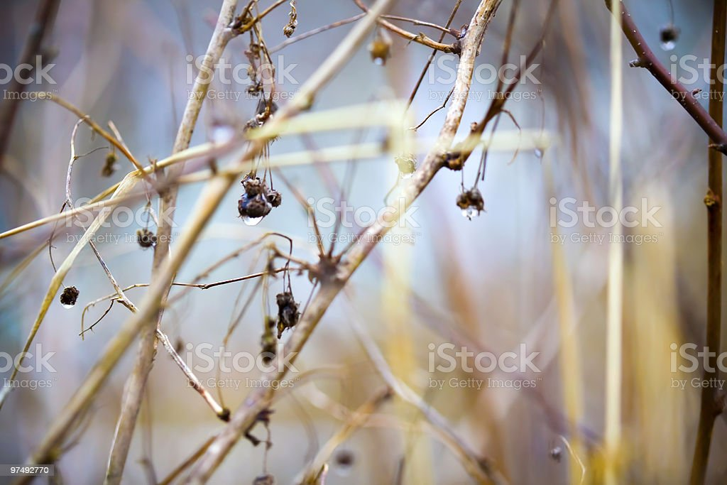 Spring abstract background royalty-free stock photo