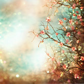 Spring abstract background with magnolia tree.